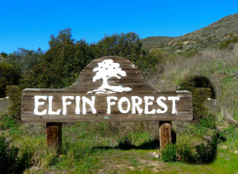 Elfin Forest—The Forest of The Witches